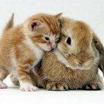 год кота и кролика